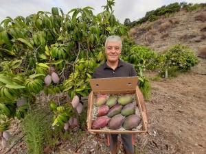 Biologischer Anbau von Mangos in Andalusien