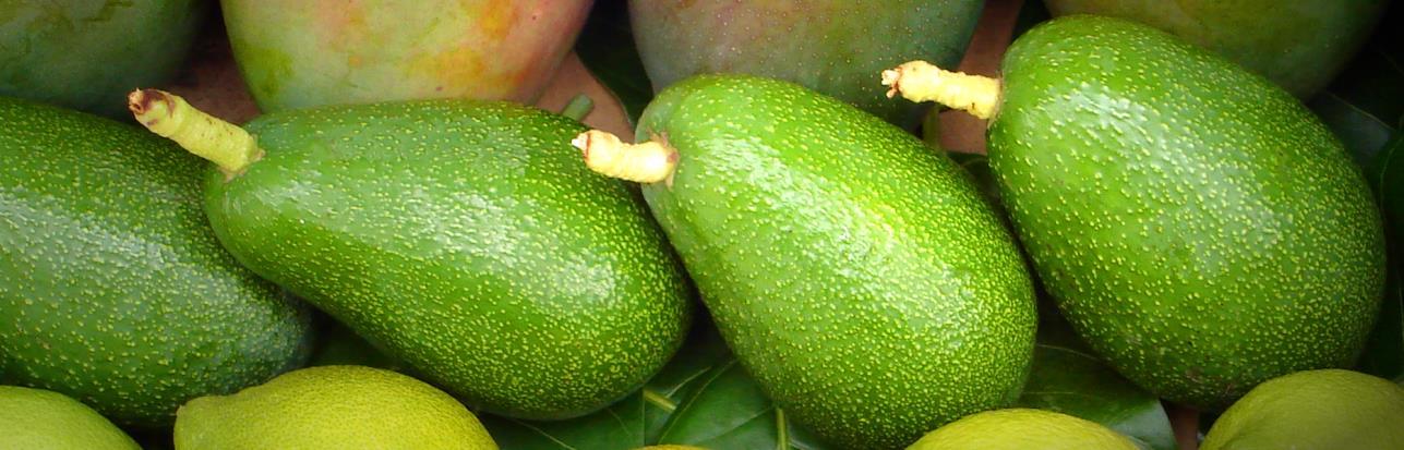 Bio-Avokados, aguacates ecológicos