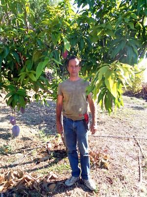 Producción ecológica de mangos en Andalucía