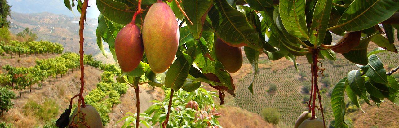 biologischer-anbau-cultivo-biologico